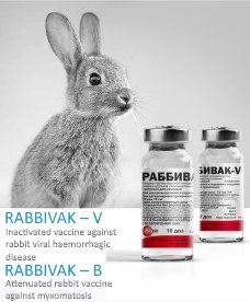 Вакцина от болезней кроликов Раббивак